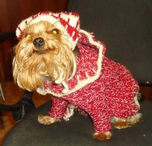 Вязаный костюм для собаки.